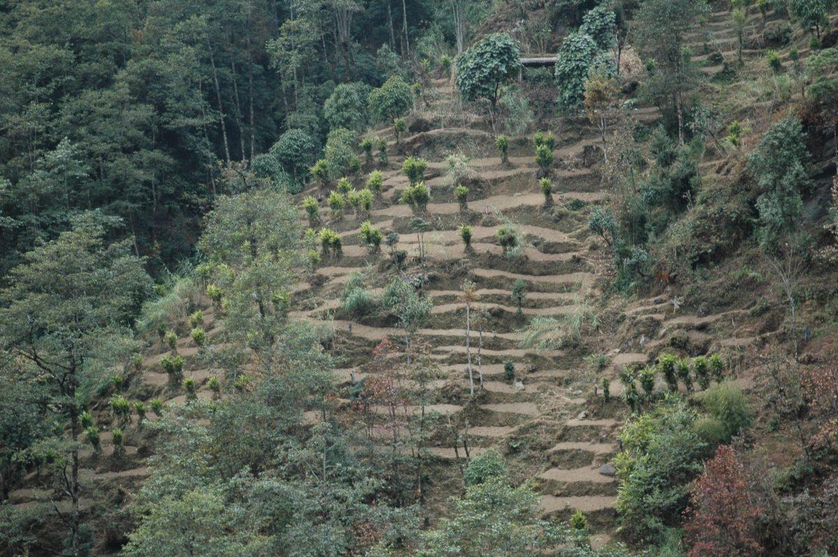 Cardamom Plantation in India